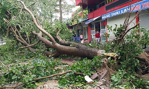 Bão càn quét hơn 3 giờ ở Nghệ An - Hà Tĩnh